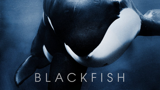 MM_Blackfish_Horizontal_Poster